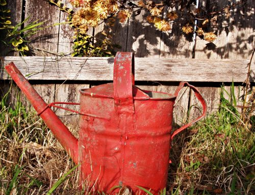 A Dancing Watering Can, an East River Treasure, and a Banned Blouse